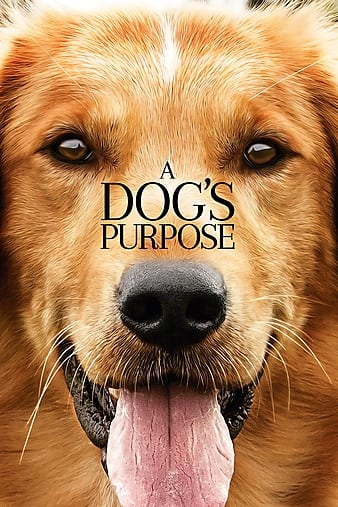 A Dogs Purpose 2017 1080p WEB-DL DD5 1 H264-FGT
